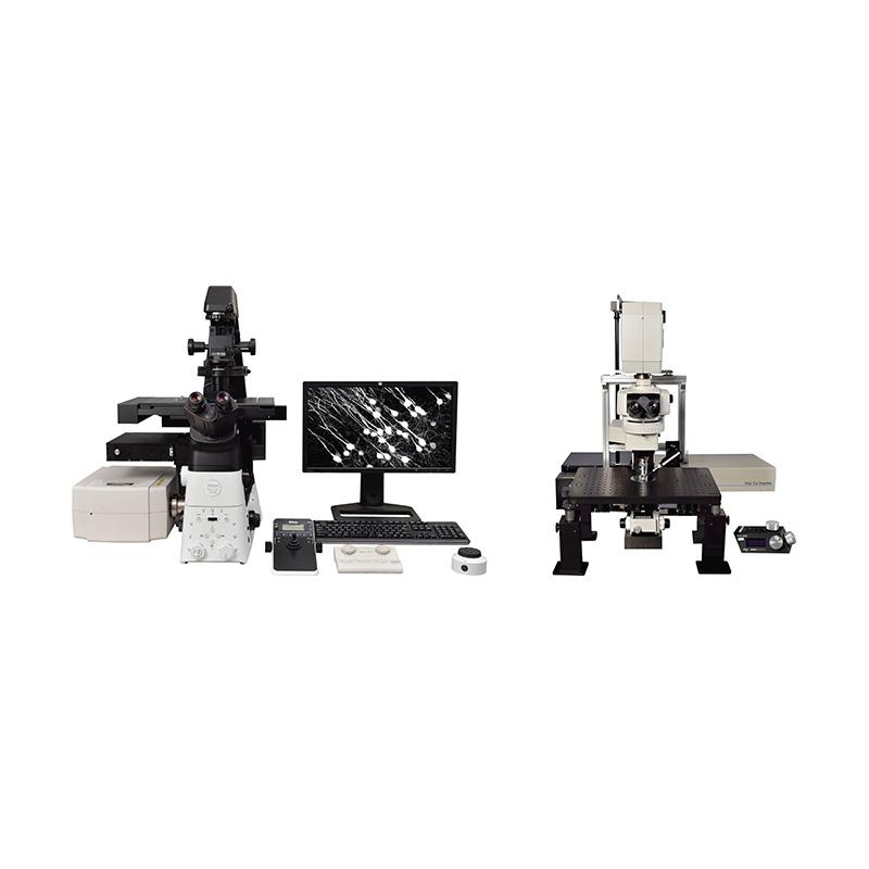 Nikon A1R MP plus Mikroskopi multifoton skanner
